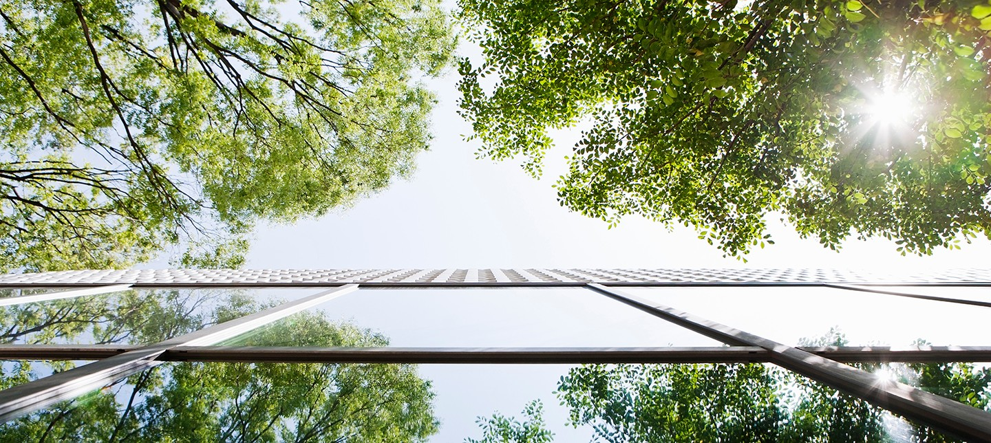 Reflection of trees on an office building's mirrored glass exterior